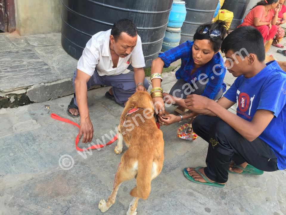 treating stray