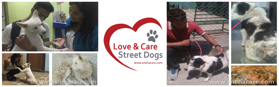 Love & Care Street Dogs