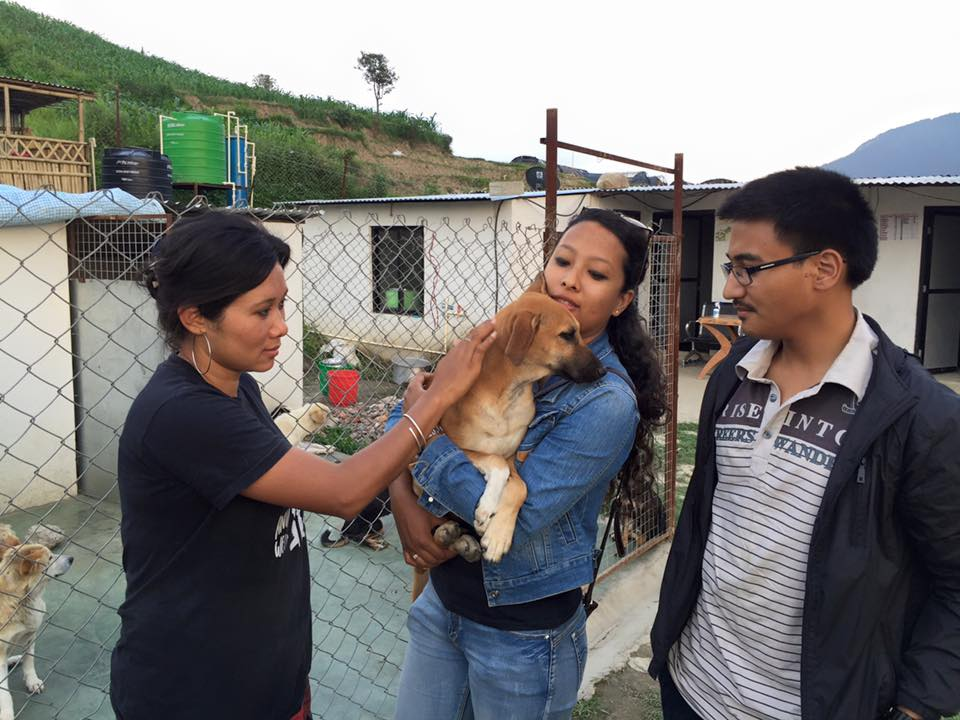 adopt street dogs