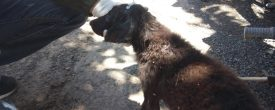 Doesn't your heart ache when you see a cute little puppy abandoned and seeking for help?
