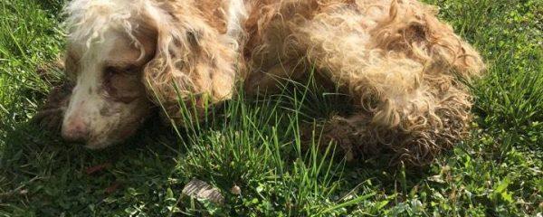 How Breed Dog Turns Street Dog?