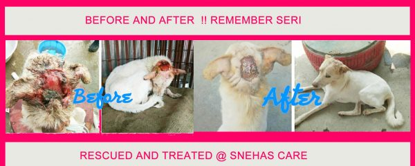 Seri is Getting Better, Before and After of our handsome Seri