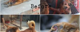 Treated a Dog with Maggot Infestation, He lost his eye But his Soul is Happy !!!